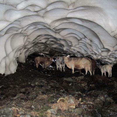 Vaches souterraines - Cirque d'Anglade - 09
